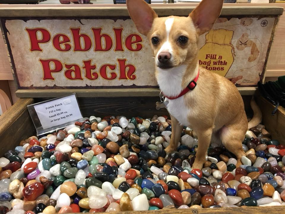A small dog sitting in a box of polished minerals on display.