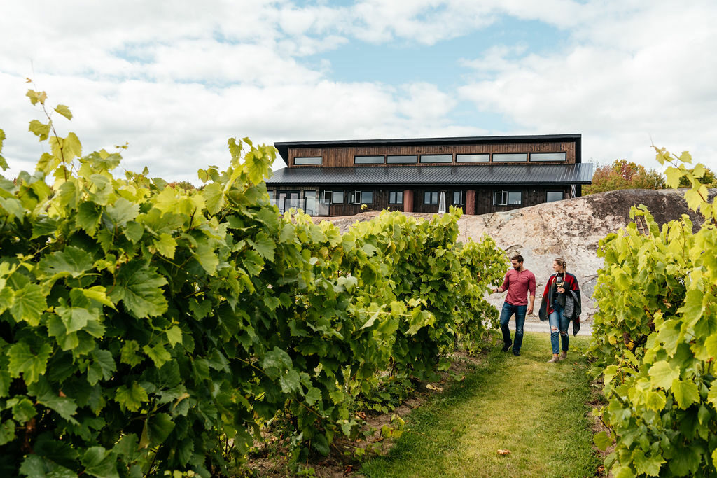 A man and woman walk down a row of grapes at Potter Settlement Winery vineyard